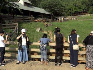 牛、ヤギ、ヒヨコなど台湾で動物とふれ合える飛牛牧場